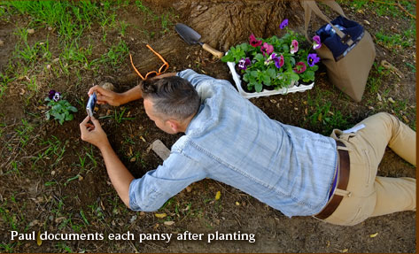 Paul documents each pansy after planting