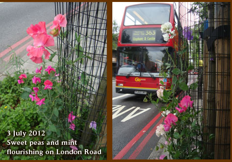 Sweet peas and mint thrive in guerrilla gardens 3 July 2012