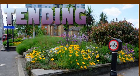 http://guerrillagardening.org/guerrillagardening/gg453b.jpg