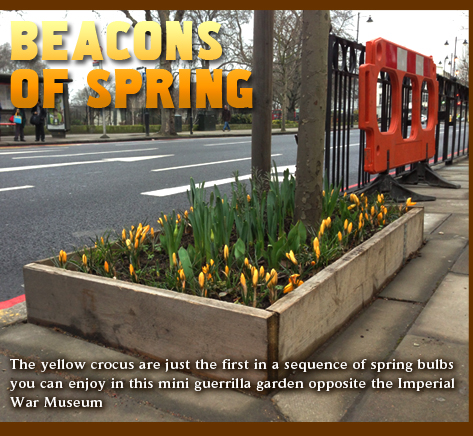 Beacons of Spring. Guerrilla gardening opposite the Imperial War Museum